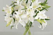 Масло лилии и другие лечебные средства на основе белой садовой лилии