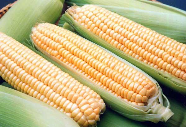 Замороженные овощные полуфабрикаты — останется только разморозить и съесть! Заморозка уже приготовленных баклажан, кукурузы, цветной капусты