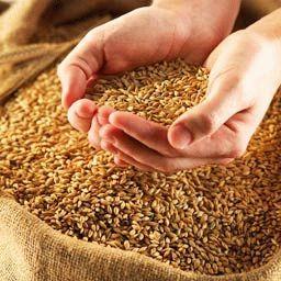 очищение организма продукты питания