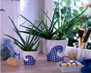 Очищающие воздух растения