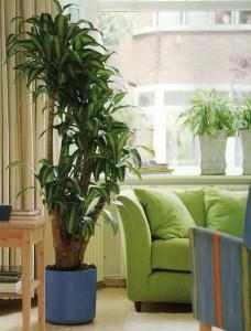 Интерьер в стиле эко: комнатные растения