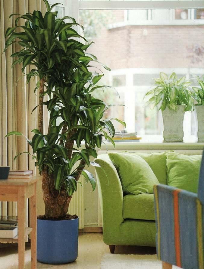 Декоративные комнатные растения фото