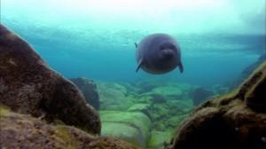 """Незабываемое озеро Байкал: фото """"Под водой"""""""