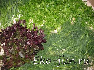 Заготовка зелени на зиму: как замораживать зелень   как сушить зелень без специальной сушки