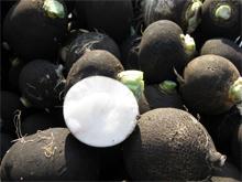 Черная редька полезные свойства и противопоказания