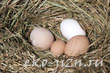 Маски для лица с яйцом