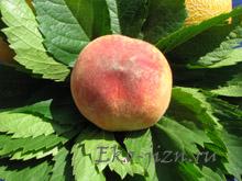 Четыре универсальных рецепта красоты на основе персика и абрикоса