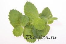 Лечение насморка народными средствами мази, травы, старинные рецепты