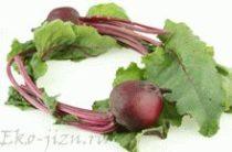 Полезные свойства ботвы, применение в кулинарии и народной медицине