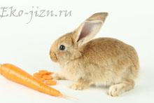 Как в квартире хранить овощи, чтобы они не пропадали Картофель, морковь, свекла, капуста, лук, чеснок