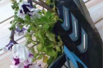 Петунии в импровизированных горшках из старых кроссовок