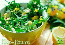 Салат из одуванчиков — несколько рецептов