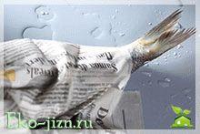 Как выбрать свежую рыбу: советы для практичных людей