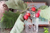 Настойка шиповника: лучшие домашние рецепты