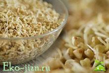 Пророщенная гречка — полезно и просто в пост Как прорастить гречку в домашних условиях