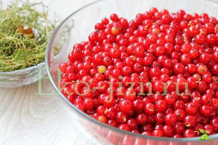 Перебрать ягоды красной смородины