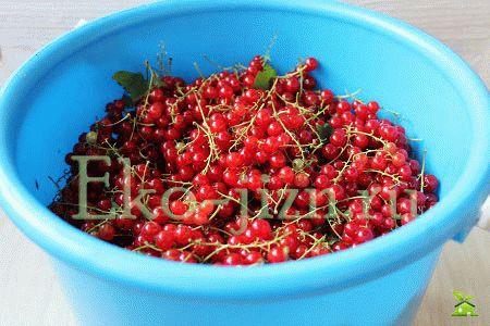 Подготовить ягоды