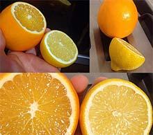 Лимонно-апельсиновая витаминная паста: позаботимся об иммунитете