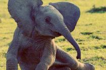 Международный день защиты слонов в зоопарках — 20 июня