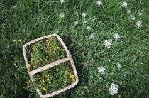 21 августа — празднование Дня сбора диких трав