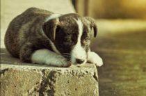 Третья суббота августа ежегодно — празднование Всемирного дня бездомных животных