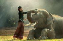 Всемирный день защиты слонов  22 сентября