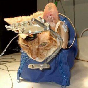Эксперимент над котом