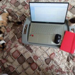 ноутбук и котик)